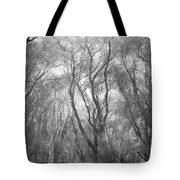 A Low Angle View Of A Ironwood Tote Bag