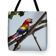 A Moment Of Rest Tote Bag