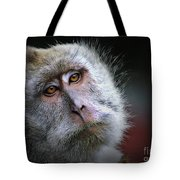 A Monkey's Look Tote Bag