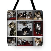 A Montage Of Kittens Tote Bag