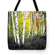 A Painting Autumn Birch Grove Tote Bag