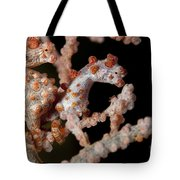 A Pair Of Pygmy Seahorse On Sea Fan Tote Bag