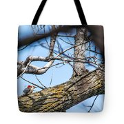 A Pair Of Red-bellied Woodpeckers Tote Bag