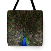 A Peacock's Feathers Tote Bag