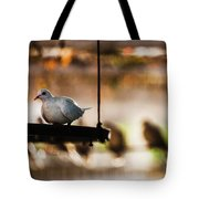 A Pigeon In A Cage Tote Bag