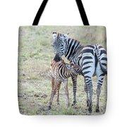 A Plains Zebra, Equus Quagga, Nursing Tote Bag