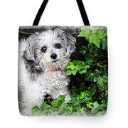 A Portrait Of Tiny Tote Bag