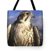 A Prairie Falcon At Dusk Tote Bag