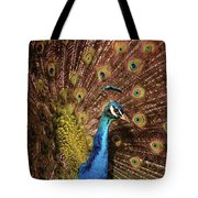 A Preening Peacock  Tote Bag