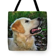 A Retriever's Loving Glance Tote Bag