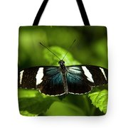 A Sara Longwing Butterfly Heliconius Tote Bag