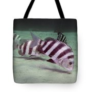 A School Of Sheepshead Feeding Tote Bag by Michael Wood