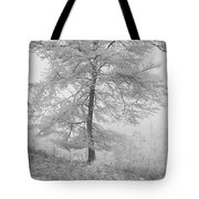 A Single Infrared Beech Tree Tote Bag