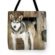 A Sled Dog Stands By Its Kennel Tote Bag