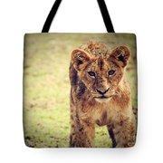 A Small Lion Cub Portrait. Tanzania Tote Bag