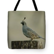 A Sole Rooster Quail Tote Bag
