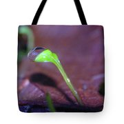 A Sprout Lifting A Waterdrop Tote Bag