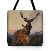 A Stag With Deer In A Wooded Landscape At Sunset Tote Bag