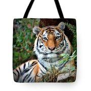 A Tigers Glance Tote Bag