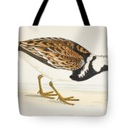 A Turnstone. Arenaria Interpres. From A Tote Bag