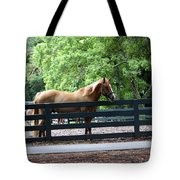 A Very Beautiful Hilton Head Island Horse Tote Bag