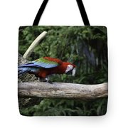 A Very Colorful And Bright Macaw Bird Perched On A Branch Tote Bag