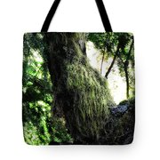 A Walk In The Woods 6 Tote Bag