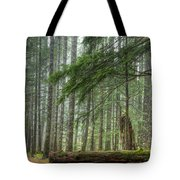 A Walk Through The Forest Tote Bag