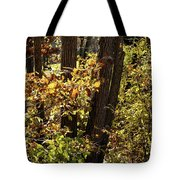 A Walk Through The Woods - 1 Tote Bag