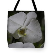 A White Orchid Flower Inside The National Orchid Tote Bag