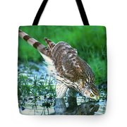 A Wild Juvenile Cooper's Hawk Drinks From A Pond Tote Bag