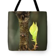 A Winter Sprout Tote Bag