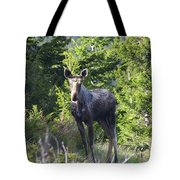 A Young Moose  Tote Bag