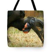 Abyssinian Ground Hornbill Tote Bag