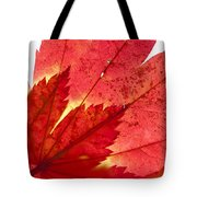 Acer From Beneath Tote Bag