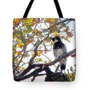 Acorn Woodpecker In Tree  In Park Sierra-ca Tote Bag