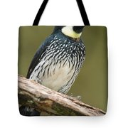 Acorn Woodpecker Melanerpes Tote Bag