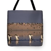Adelie Penguin Group Commuting Cape Tote Bag