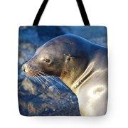 Adorable Sealion Tote Bag