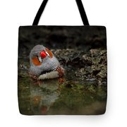 Adorable Zebra Finch Taking A Bath Tote Bag