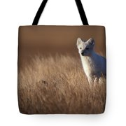 Adult Arctic Fox On The Tundra In Late Tote Bag