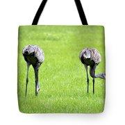 Adult Florida Sandhill Cranes Grus Canadensis Pratensis I Usa Tote Bag