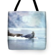 Adult Pacific Harbor Seals On An Ice Tote Bag
