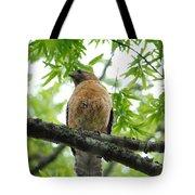 Adult Red Shouldered Hawk Tote Bag