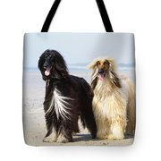 Afghan Hound Dogs Tote Bag