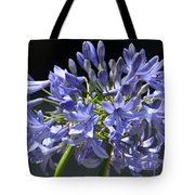 African Blue Lily Tote Bag
