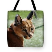 African Caracal Lynx  Tote Bag