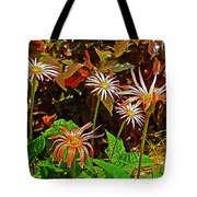 African Daisies In Aswan Botanical Garden On Plantation Island In Aswan-egypt Tote Bag