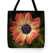 African Daisy - Bicolor Osteospermum Tote Bag