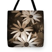 African Daisy Named African Sun Tote Bag